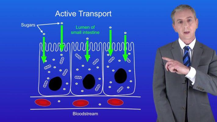 GCSE Science Biology (9-1) Active Transport