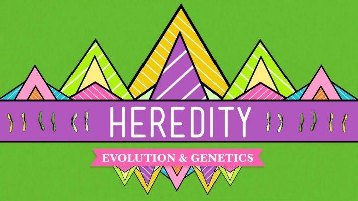 Heredity: Crash Course Biology #9