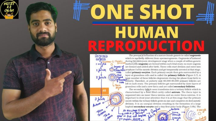 Human Reproduction in One Shot||CBSE class 12 Biology||NCERT Explanation.