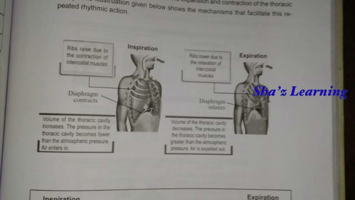 BIOLOGY |PART 4||ACTIVITY CARD|STD 9|LEARNING EXCELLENCE RECORD |WORKSHEET