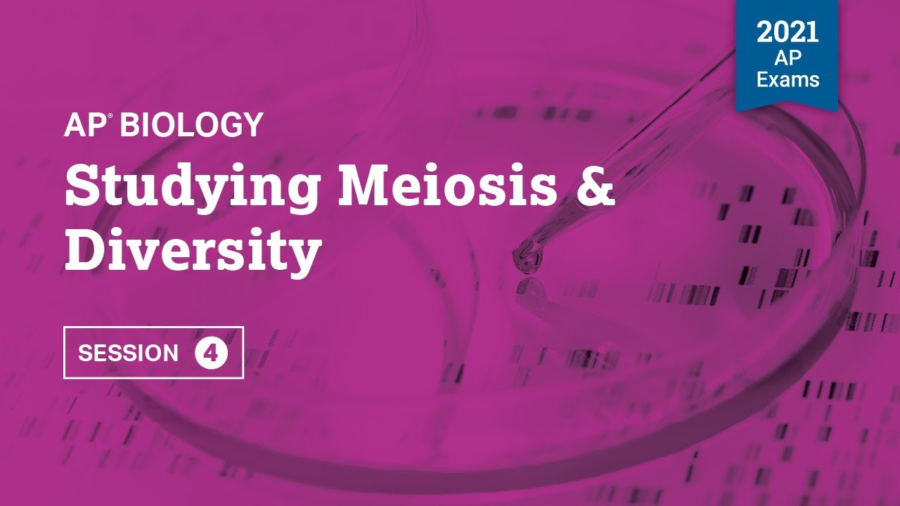 Studying Meiosis & Diversity | Live Review Session 4 | AP Biology